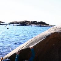 Sälen från havet